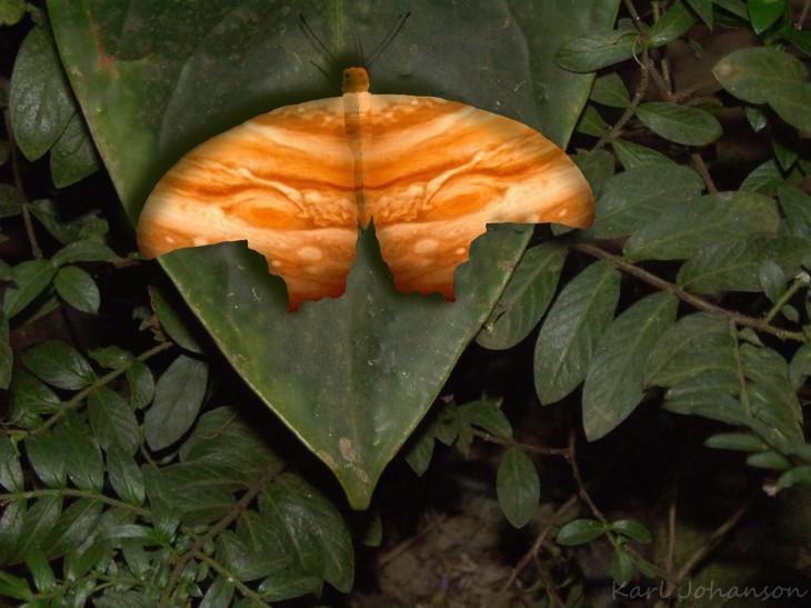 jupiter-butterfly